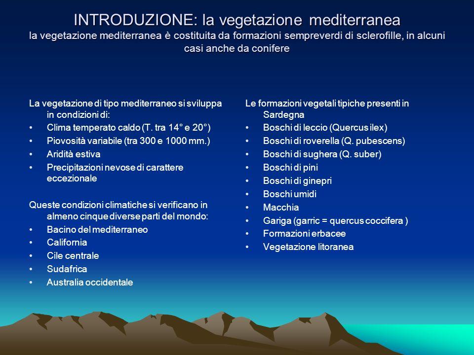 INTRODUZIONE: la vegetazione mediterranea la vegetazione mediterranea è costituita da formazioni sempreverdi di sclerofille, in alcuni casi anche da conifere La vegetazione di tipo mediterraneo si sviluppa in condizioni di: Clima temperato caldo (T.