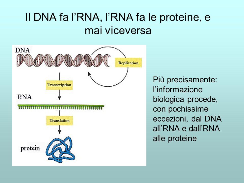 Il DNA fa lRNA, lRNA fa le proteine, e mai viceversa Più precisamente: linformazione biologica procede, con pochissime eccezioni, dal DNA allRNA e dallRNA alle proteine