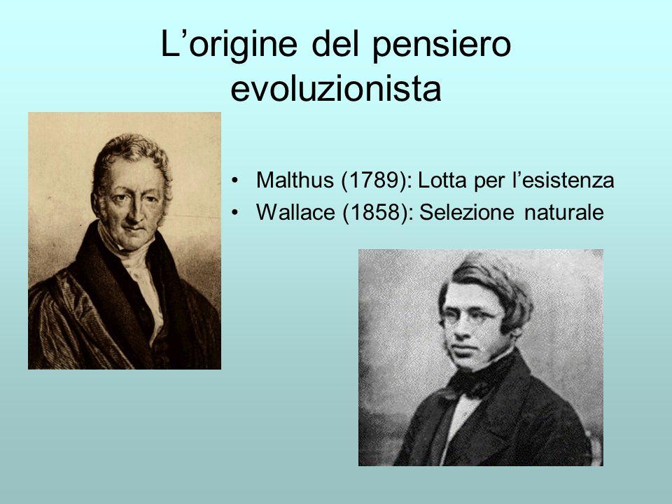 Lorigine del pensiero evoluzionista Malthus (1789): Lotta per lesistenza Wallace (1858): Selezione naturale
