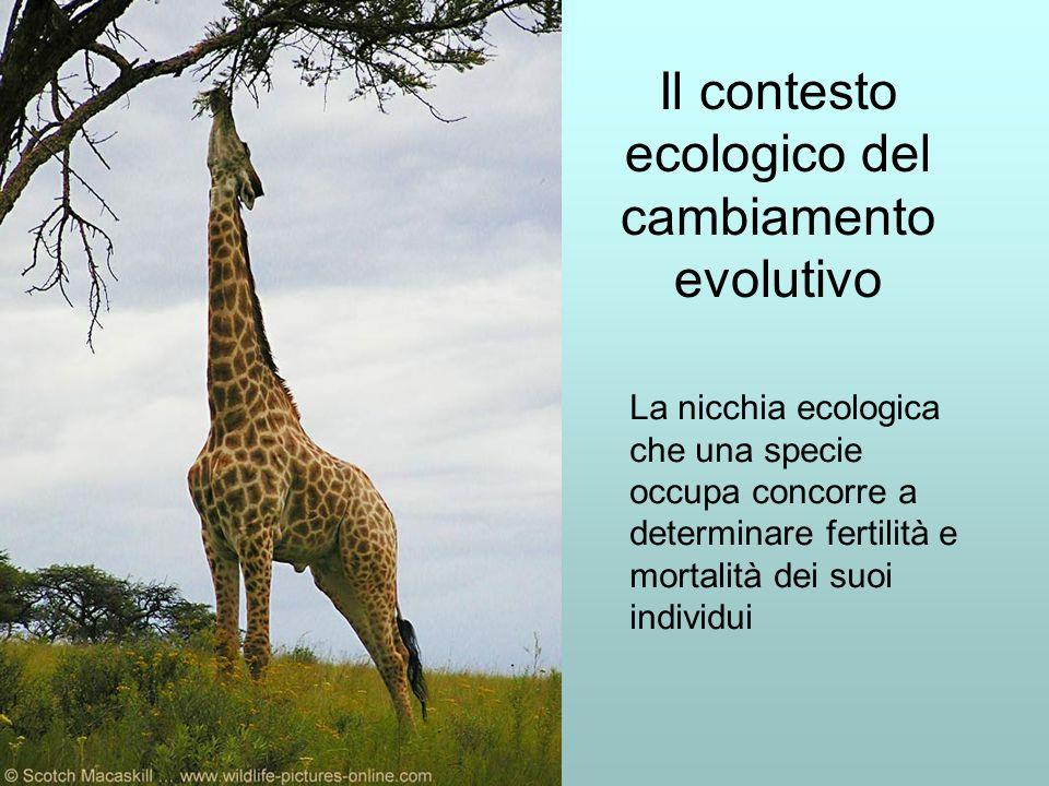 Il contesto ecologico del cambiamento evolutivo La nicchia ecologica che una specie occupa concorre a determinare fertilità e mortalità dei suoi individui