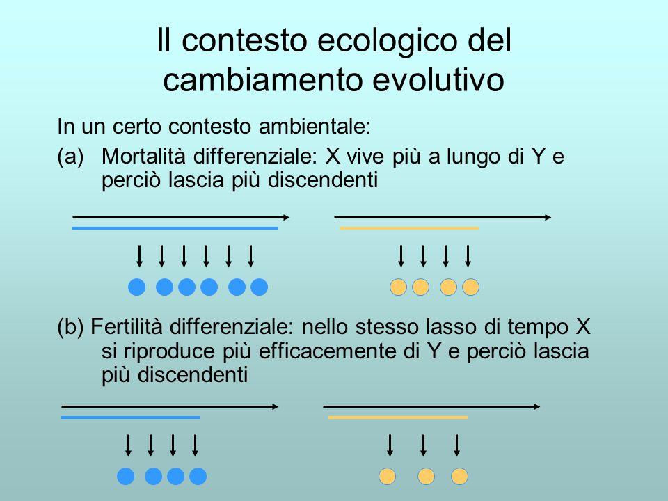 Il contesto ecologico del cambiamento evolutivo In un certo contesto ambientale: (a)Mortalità differenziale: X vive più a lungo di Y e perciò lascia più discendenti (b) Fertilità differenziale: nello stesso lasso di tempo X si riproduce più efficacemente di Y e perciò lascia più discendenti