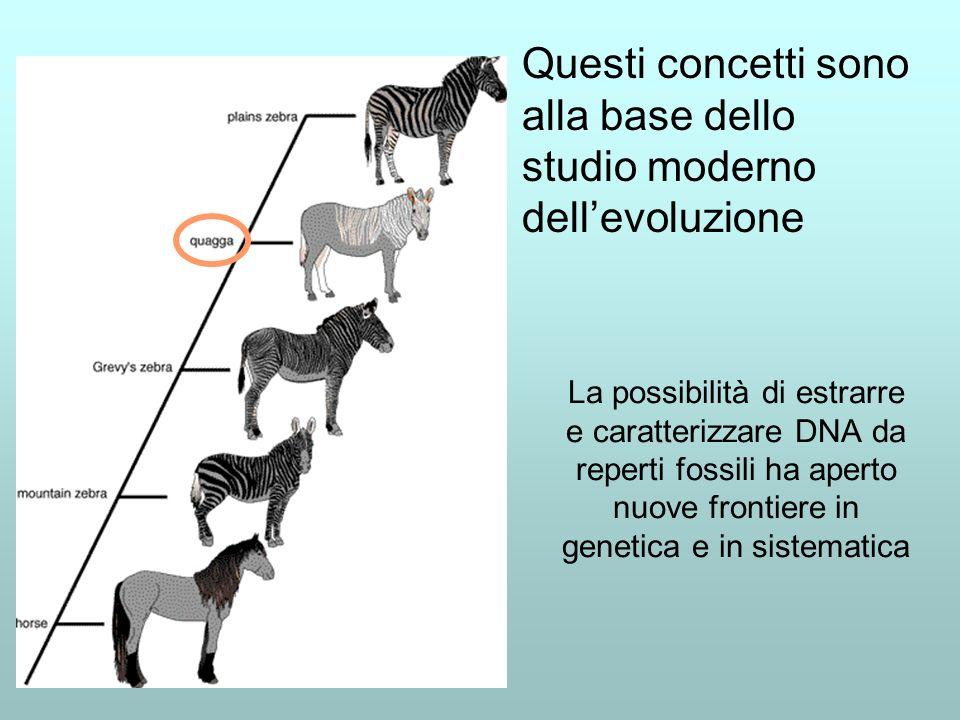 La possibilità di estrarre e caratterizzare DNA da reperti fossili ha aperto nuove frontiere in genetica e in sistematica Questi concetti sono alla base dello studio moderno dellevoluzione