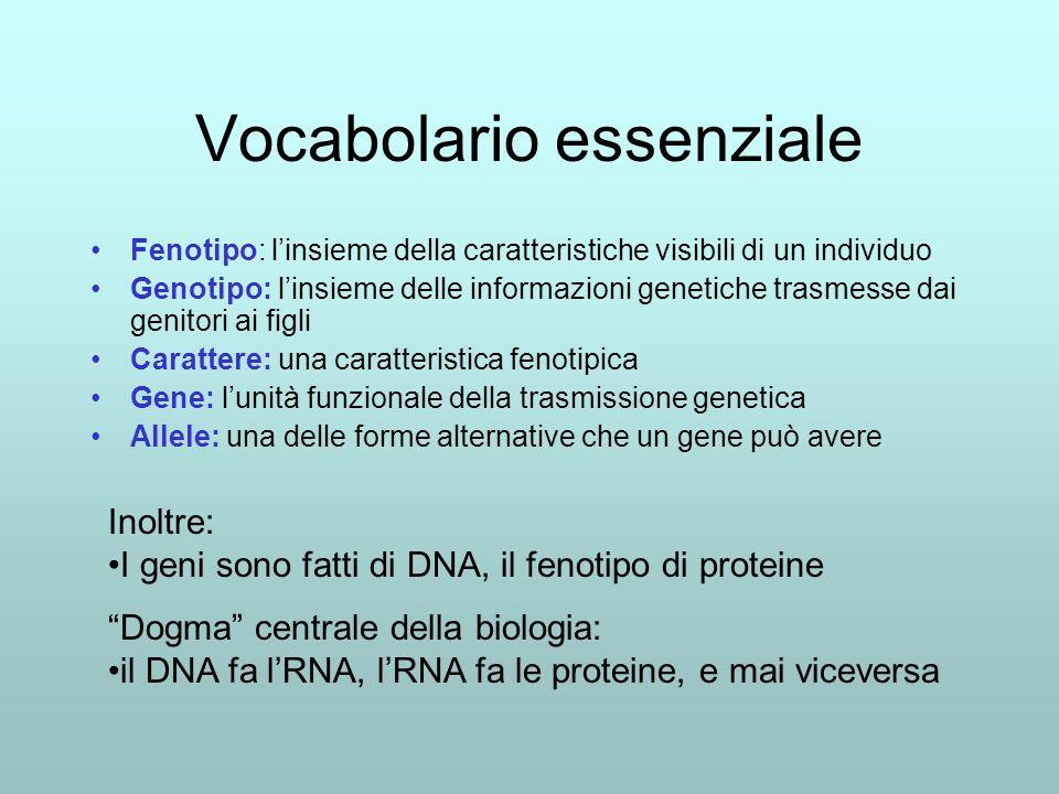 Vocabolario essenziale Fenotipo: linsieme della caratteristiche visibili di un individuo Genotipo: linsieme delle informazioni genetiche trasmesse dai