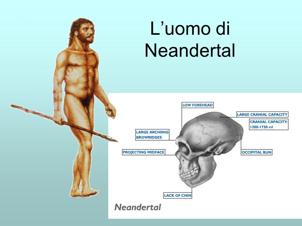 Luomo di Neandertal