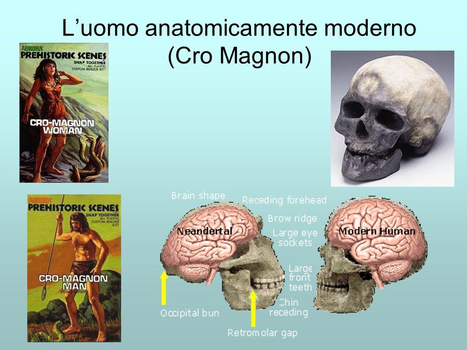 Luomo anatomicamente moderno (Cro Magnon)