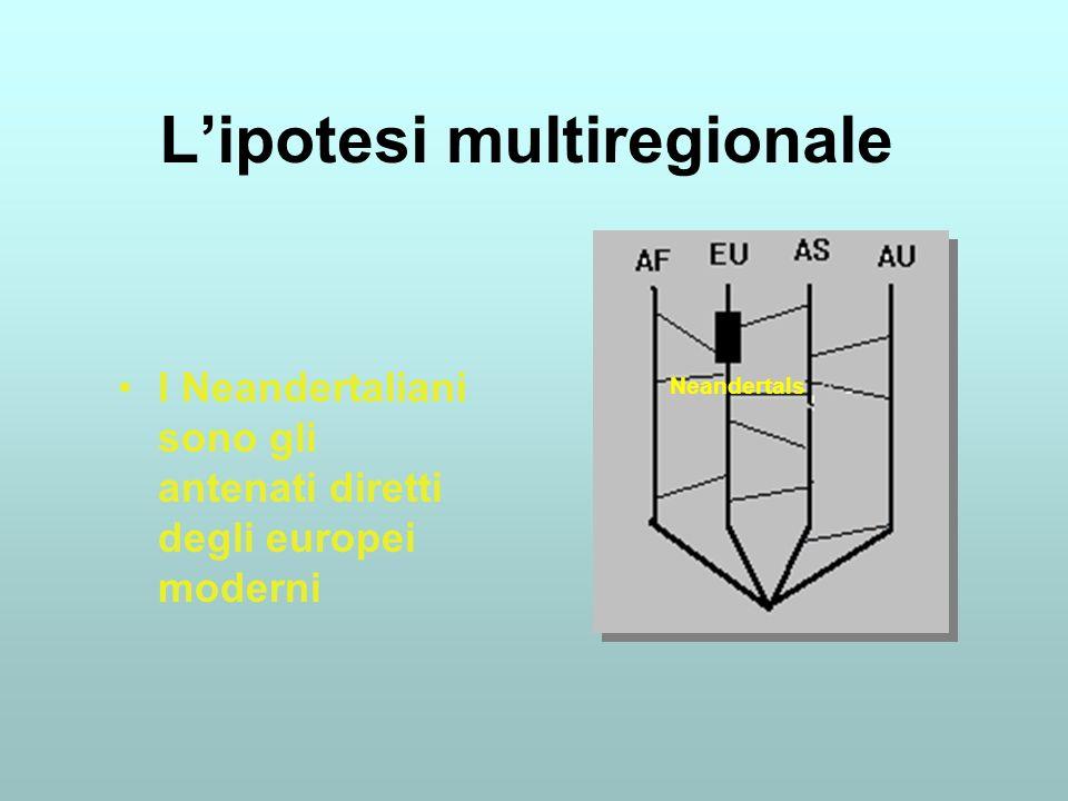 Lipotesi multiregionale I Neandertaliani sono gli antenati diretti degli europei moderni Neandertals