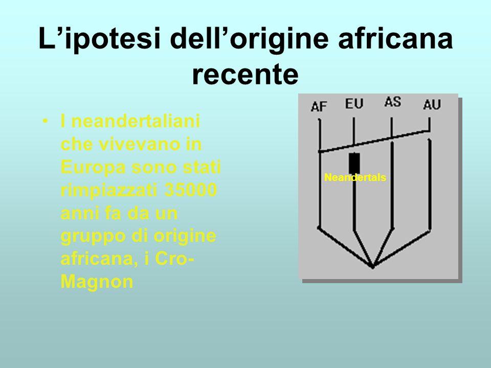 Lipotesi dellorigine africana recente I neandertaliani che vivevano in Europa sono stati rimpiazzati 35000 anni fa da un gruppo di origine africana, i Cro- Magnon Neandertals