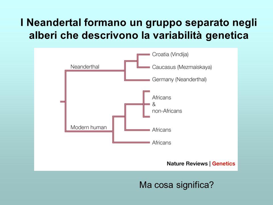 I Neandertal formano un gruppo separato negli alberi che descrivono la variabilità genetica Ma cosa significa?