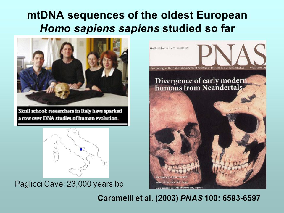 mtDNA sequences of the oldest European Homo sapiens sapiens studied so far Paglicci Cave: 23,000 years bp Caramelli et al. (2003) PNAS 100: 6593-6597