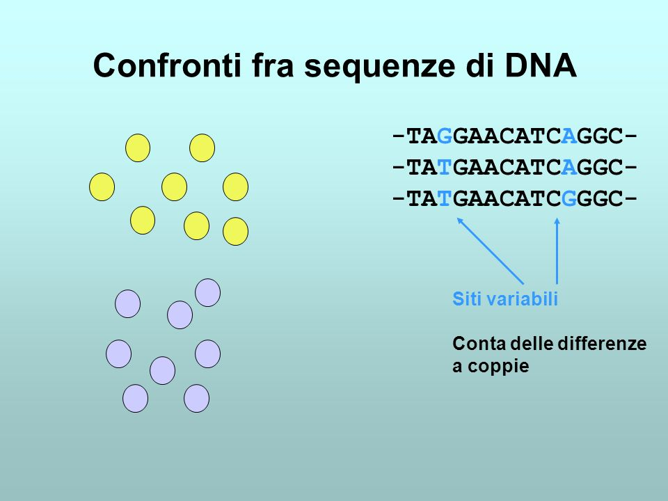 Confronti fra sequenze di DNA -TAGGAACATCAGGC- -TATGAACATCAGGC- -TATGAACATCGGGC- Siti variabili Conta delle differenze a coppie