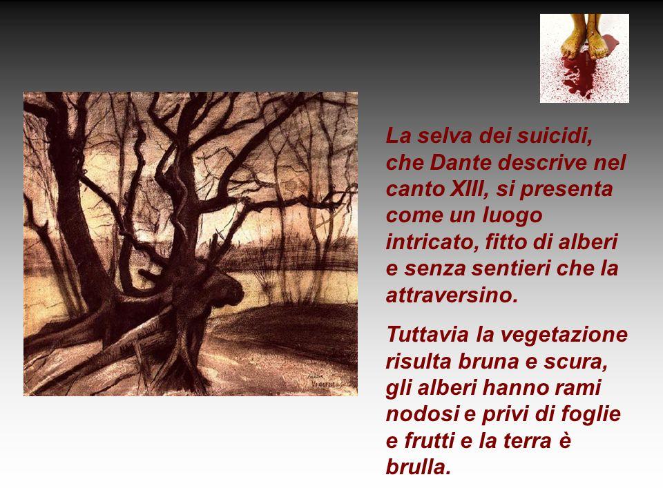 La selva dei suicidi, che Dante descrive nel canto XIII, si presenta come un luogo intricato, fitto di alberi e senza sentieri che la attraversino. Tu