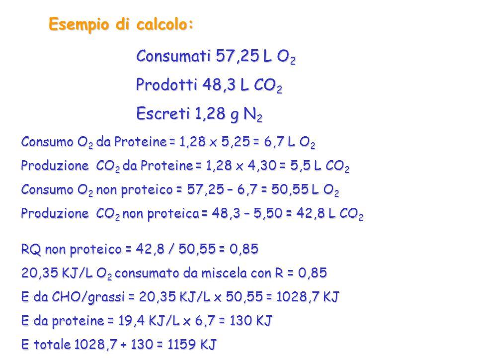 Esempio di calcolo: Consumati 57,25 L O 2 Prodotti 48,3 L CO 2 Escreti 1,28 g N 2 Consumo O 2 da Proteine = 1,28 x 5,25 = 6,7 L O 2 Produzione CO 2 da