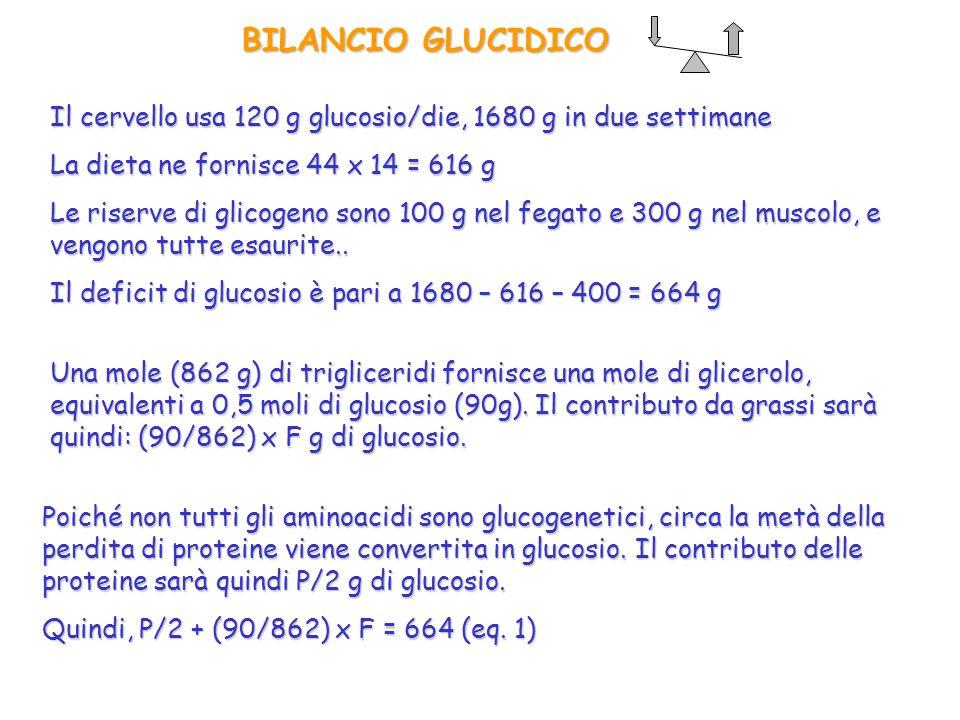 BILANCIO GLUCIDICO Il cervello usa 120 g glucosio/die, 1680 g in due settimane La dieta ne fornisce 44 x 14 = 616 g Le riserve di glicogeno sono 100 g