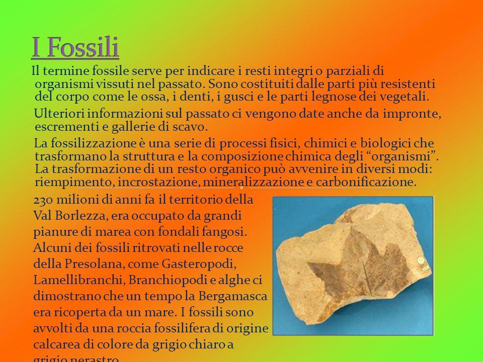 Il termine fossile serve per indicare i resti integri o parziali di organismi vissuti nel passato. Sono costituiti dalle parti più resistenti del corp