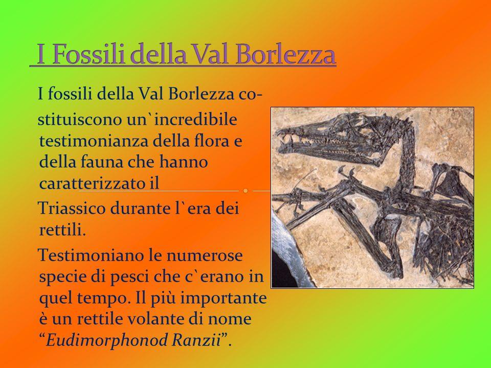 I fossili della Val Borlezza co- stituiscono un`incredibile testimonianza della flora e della fauna che hanno caratterizzato il Triassico durante l`er
