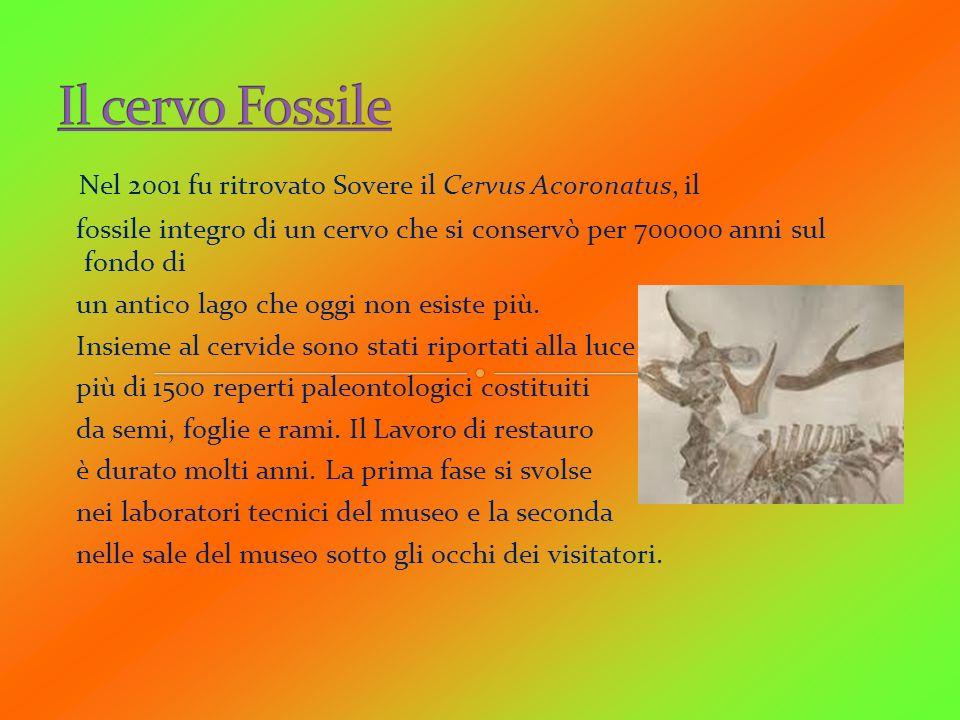 Nel 2001 fu ritrovato Sovere il Cervus Acoronatus, il fossile integro di un cervo che si conservò per 700000 anni sul fondo di un antico lago che oggi