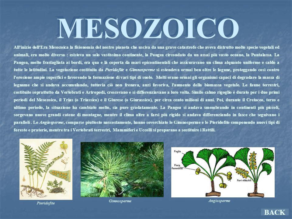 DISTINZIONE Tutte le specie conosciute (oltre 300) rientrano in due grosse categorie: i Saurischi e gli Ornitischi.