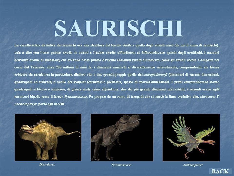 ORNITISCHI ORNITISCHI La caratteristica distintiva degli ornitischi era una struttura del bacino simile a quella degli uccelli (da cui il nome), con losso pubico e lischio entrambi rivolti allindietro.