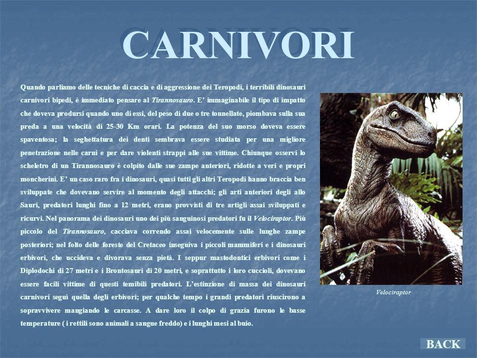 ERBIVORI ERBIVORI BACK Per i grandi dinosauri erbivori le dimensioni costituivano una sicura difesa.