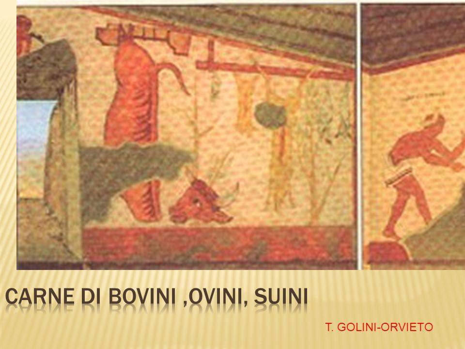 T. GOLINI-ORVIETO