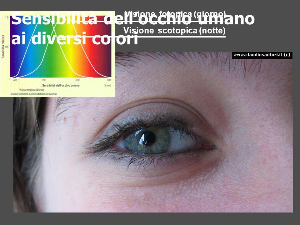 Visione fotopica (giorno) Visione scotopica (notte) Sensibilità dellocchio umano ai diversi colori