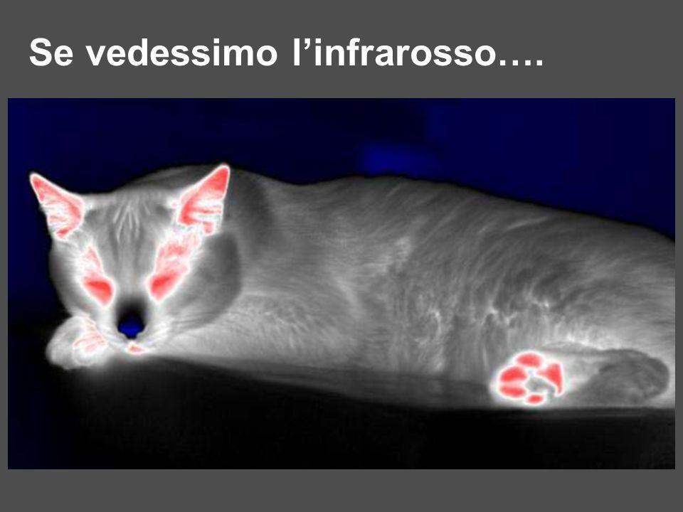 Se vedessimo linfrarosso….