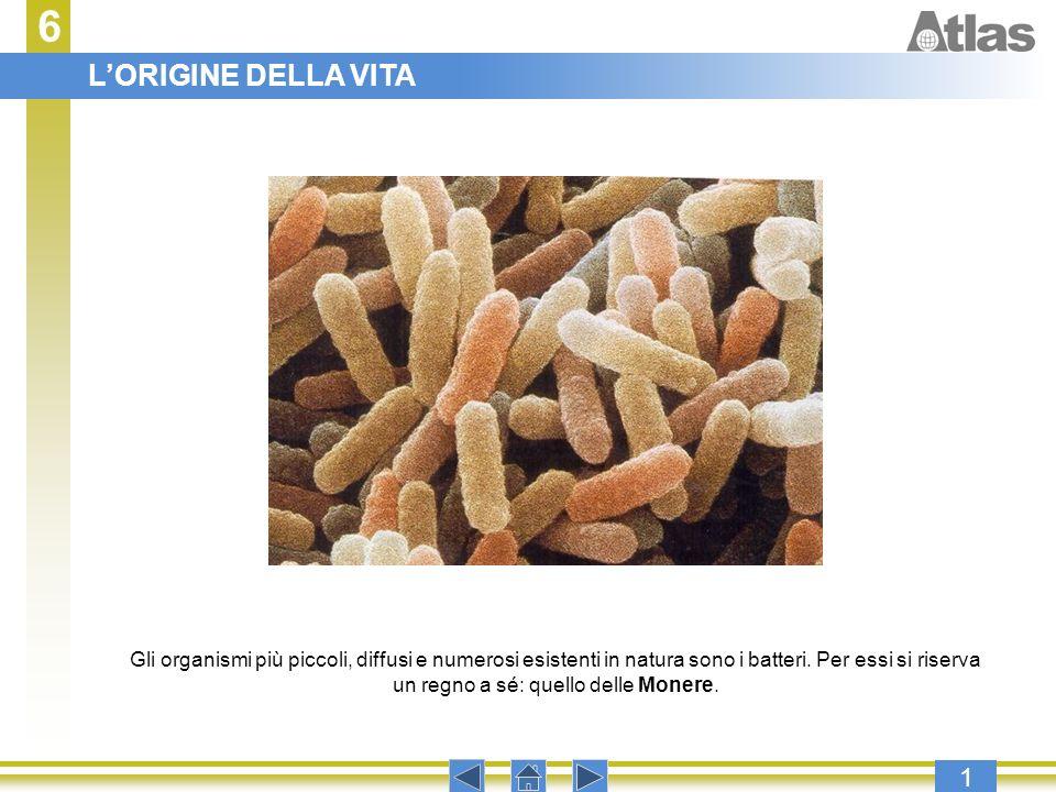 6 1 Premere invio per procedere con la presentazione. Gli organismi più piccoli, diffusi e numerosi esistenti in natura sono i batteri. Per essi si ri