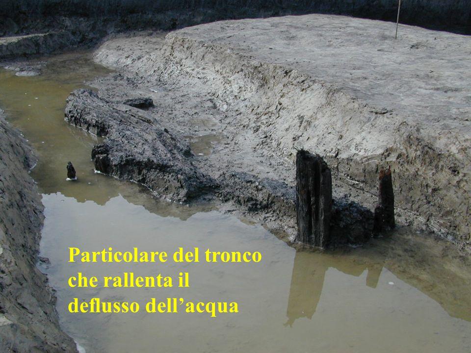 Particolare del tronco che rallenta il deflusso dellacqua