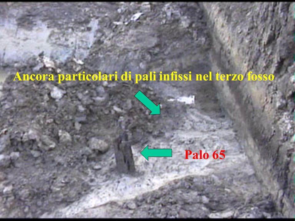 Ancora particolari di pali infissi nel terzo fosso Palo 65