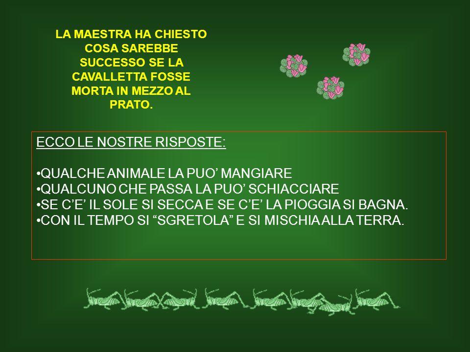 LA MAESTRA HA CHIESTO COSA SAREBBE SUCCESSO SE LA CAVALLETTA FOSSE MORTA IN MEZZO AL PRATO. ECCO LE NOSTRE RISPOSTE: QUALCHE ANIMALE LA PUO MANGIARE Q