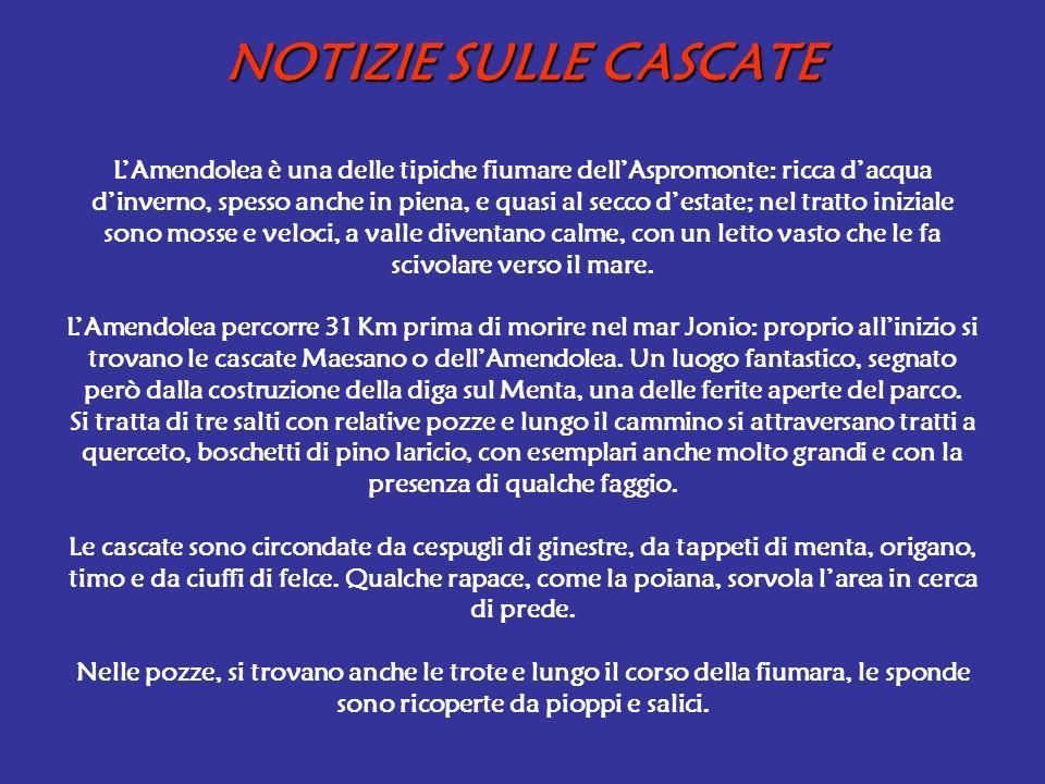 NOTIZIE SULLE CASCATE LAmendolea è una delle tipiche fiumare dellAspromonte: ricca dacqua dinverno, spesso anche in piena, e quasi al secco destate; n