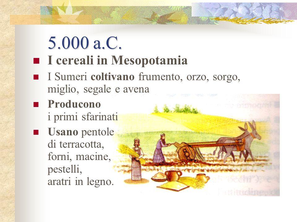 Dal 9.000 al 5.000 a.C. Luomo inizia a produrre il cibo Individua i vegetali commestibili, seleziona i primi animali dallevamento Coltiva erbe, ortagg