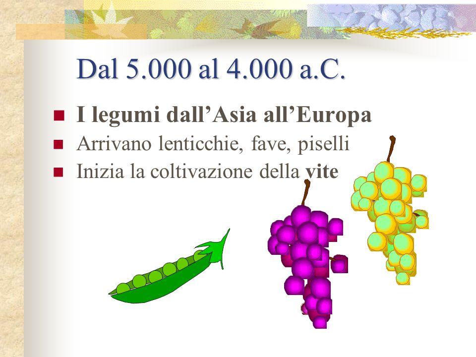 5.000 a.C. I cereali in Mesopotamia I Sumeri coltivano frumento, orzo, sorgo, miglio, segale e avena Producono i primi sfarinati Usano pentole di terr