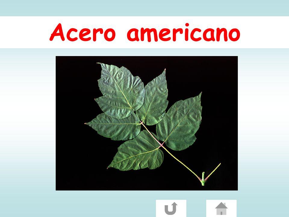 Acero americano