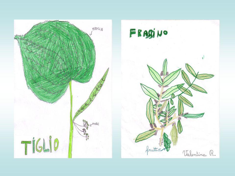 Abbiamo disegnato tutte queste meraviglie della natura cercando di riportare i particolari che ad occhio nudo non avremmo mai potuto vedere… Il mondo vegetale è davvero straordinario!!!!