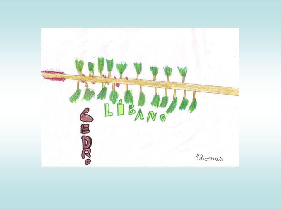 Ha le foglie formate da solo 3-7 foglioline.