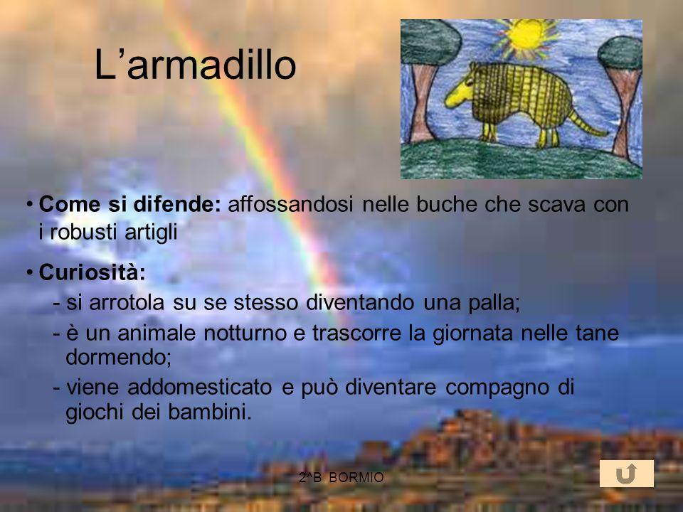 2^B BORMIO Larmadillo Come è fatto: ha una corazza costituita da squame e placche che formano due grossi scudi sulle spalle e sul bacino Cosa mangia: