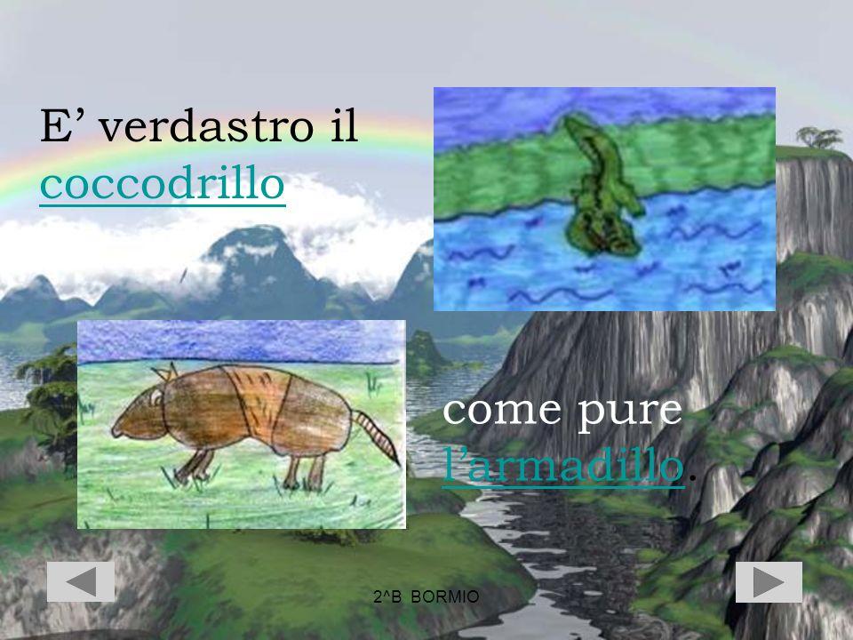 2^B BORMIO E verdastro il coccodrillo coccodrillo come pure larmadillo. larmadillo