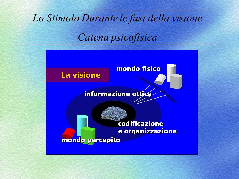 Lo Stimolo Durante le fasi della visione Catena psicofisica