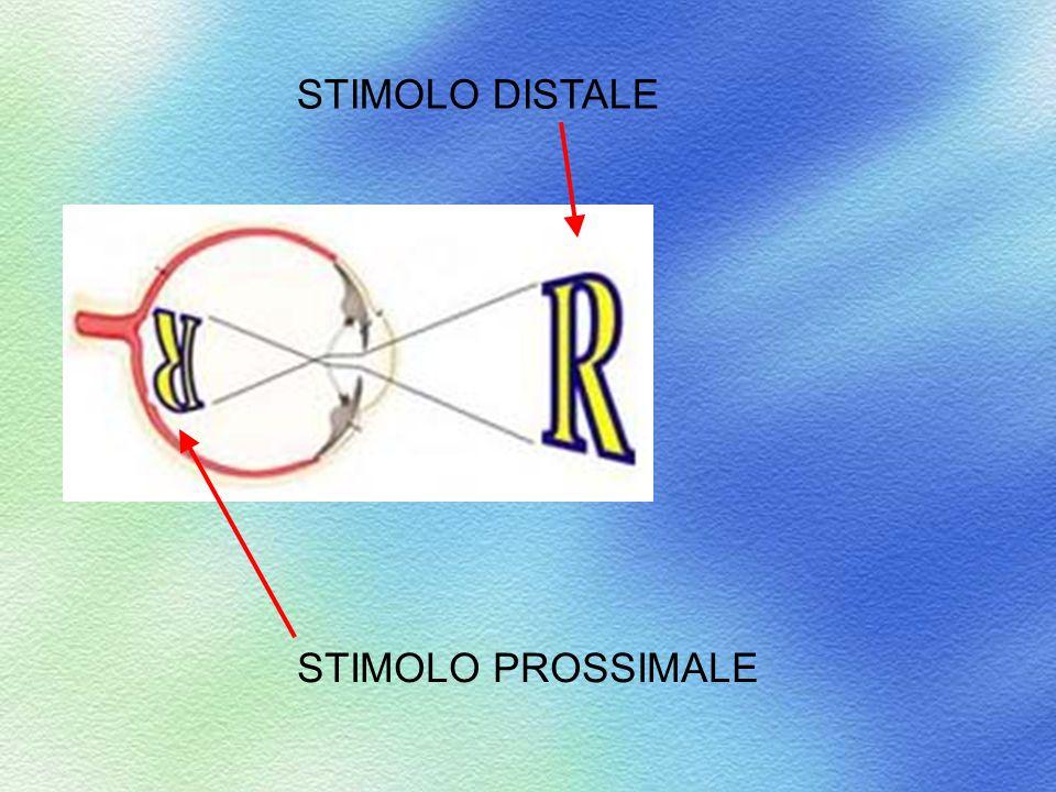 STIMOLO DISTALE STIMOLO PROSSIMALE