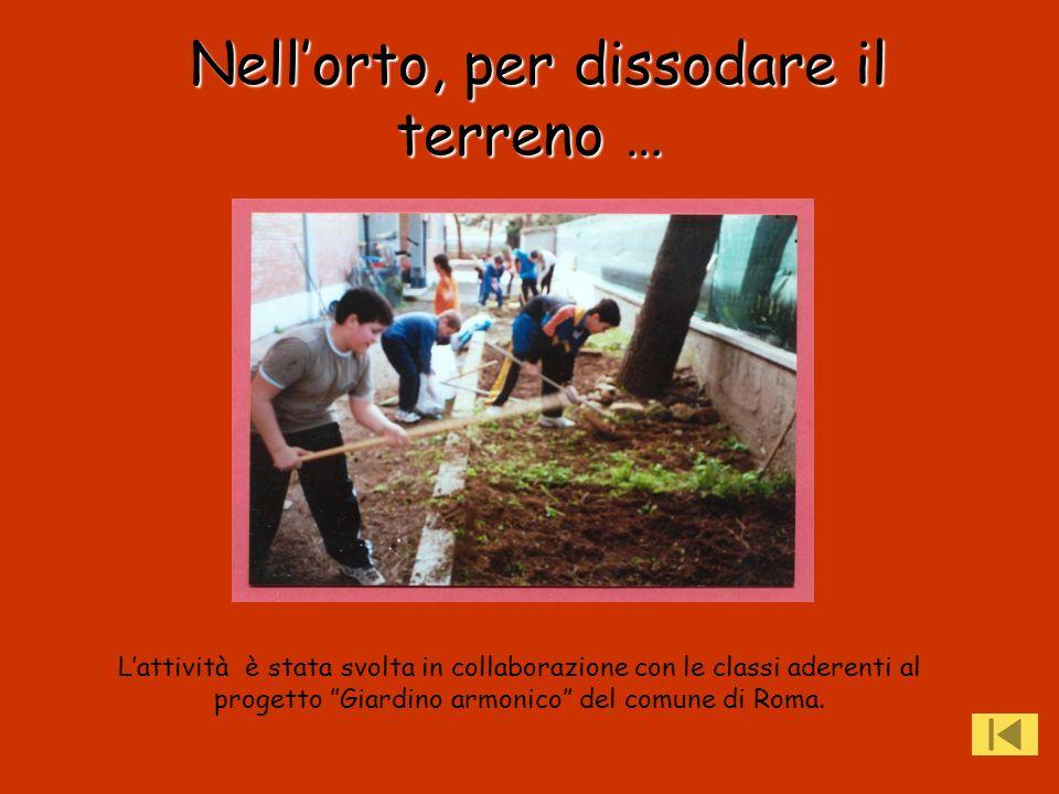 Nellorto, per dissodare il terreno … Lattività è stata svolta in collaborazione con le classi aderenti al progetto Giardino armonico del comune di Rom