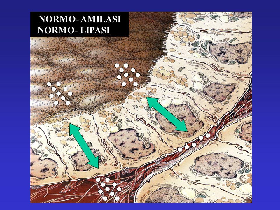 NORMO- AMILASI NORMO- LIPASI