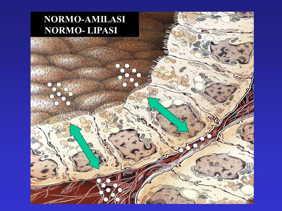 NORMO-AMILASI NORMO- LIPASI