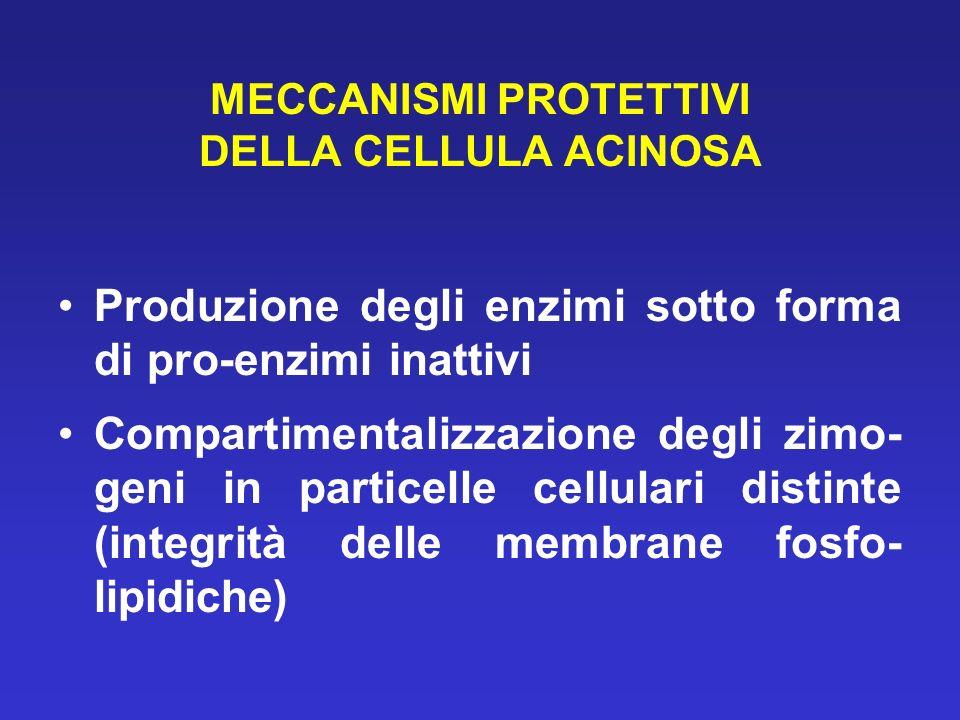 MECCANISMI PROTETTIVI DELLA CELLULA ACINOSA Produzione degli enzimi sotto forma di pro-enzimi inattivi Compartimentalizzazione degli zimo- geni in particelle cellulari distinte (integrità delle membrane fosfo- lipidiche)