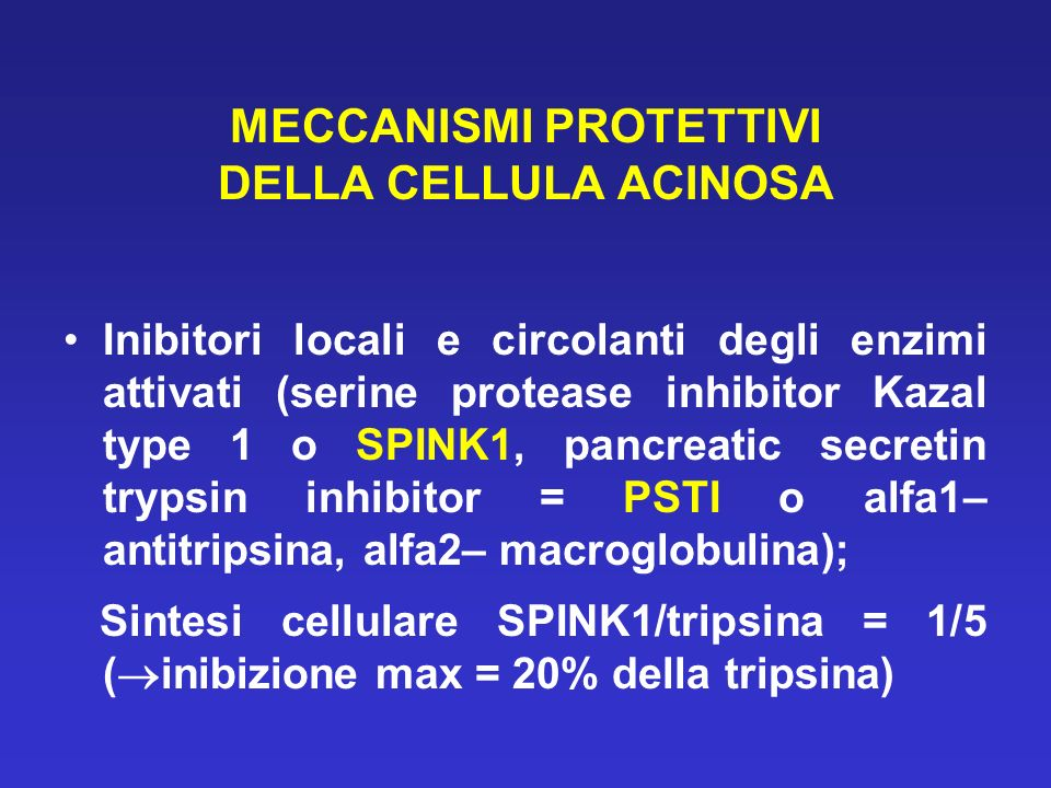 MECCANISMI PROTETTIVI DELLA CELLULA ACINOSA Inibitori locali e circolanti degli enzimi attivati (serine protease inhibitor Kazal type 1 o SPINK1, pancreatic secretin trypsin inhibitor = PSTI o alfa1– antitripsina, alfa2– macroglobulina); Sintesi cellulare SPINK1/tripsina = 1/5 ( inibizione max = 20% della tripsina)
