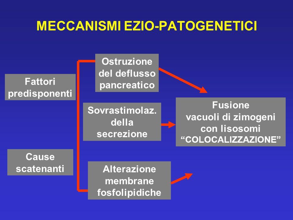 MECCANISMI EZIO-PATOGENETICI Fattori predisponenti Cause scatenanti Ostruzione del deflusso pancreatico Sovrastimolaz.