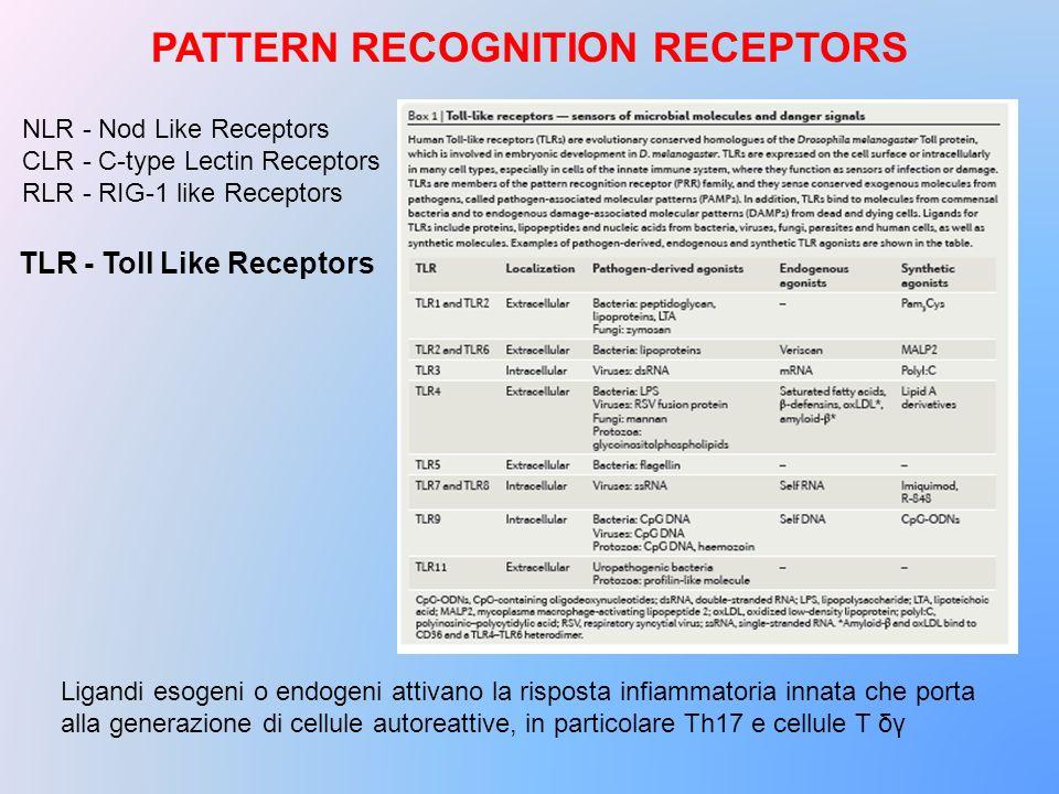 NLR - Nod Like Receptors CLR - C-type Lectin Receptors RLR - RIG-1 like Receptors Ligandi esogeni o endogeni attivano la risposta infiammatoria innata
