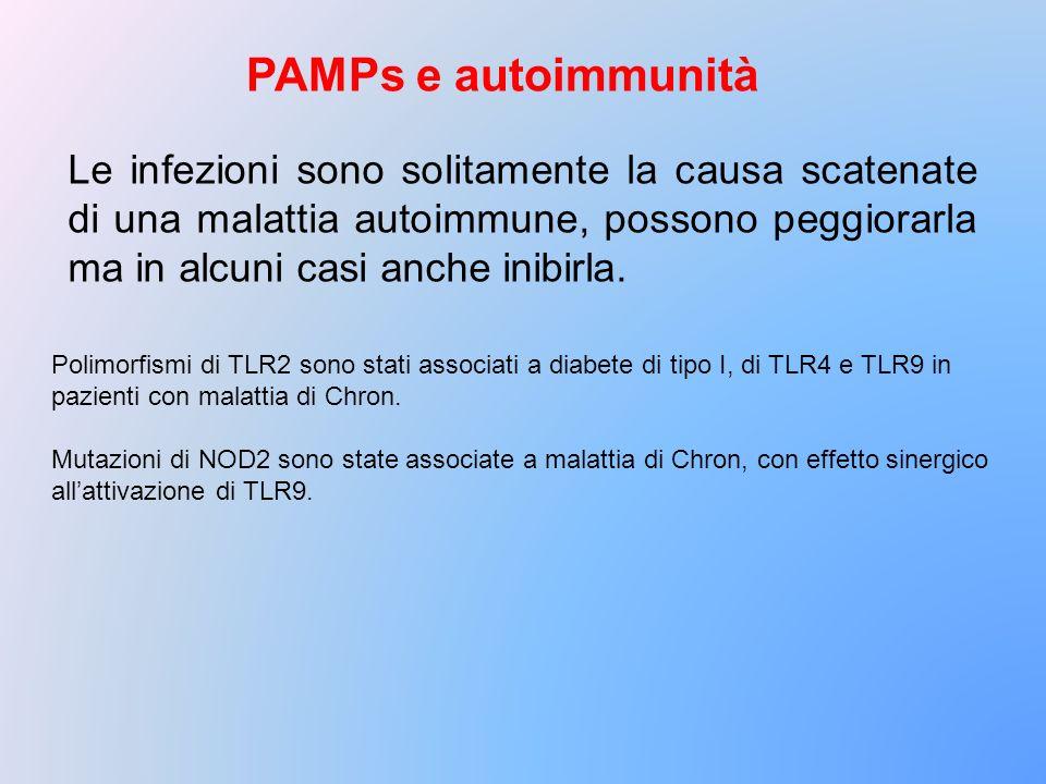 PAMPs e autoimmunità Polimorfismi di TLR2 sono stati associati a diabete di tipo I, di TLR4 e TLR9 in pazienti con malattia di Chron. Mutazioni di NOD