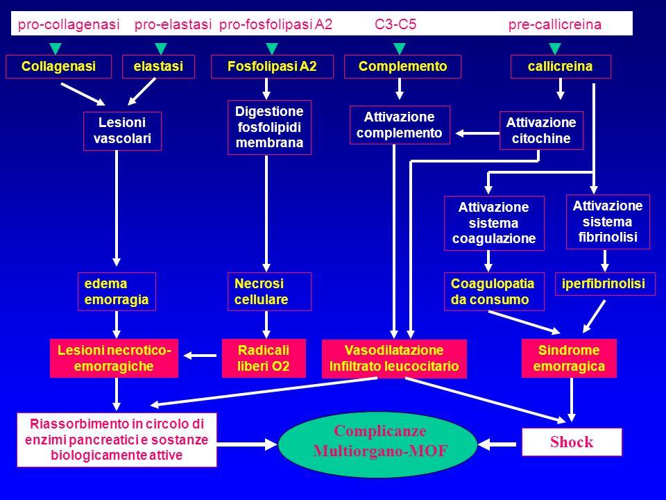 Riassorbimento in circolo di enzimi pancreatici e sostanze biologicamente attive CollagenasielastasiFosfolipasi A2Complementocallicreina Lesioni vasco
