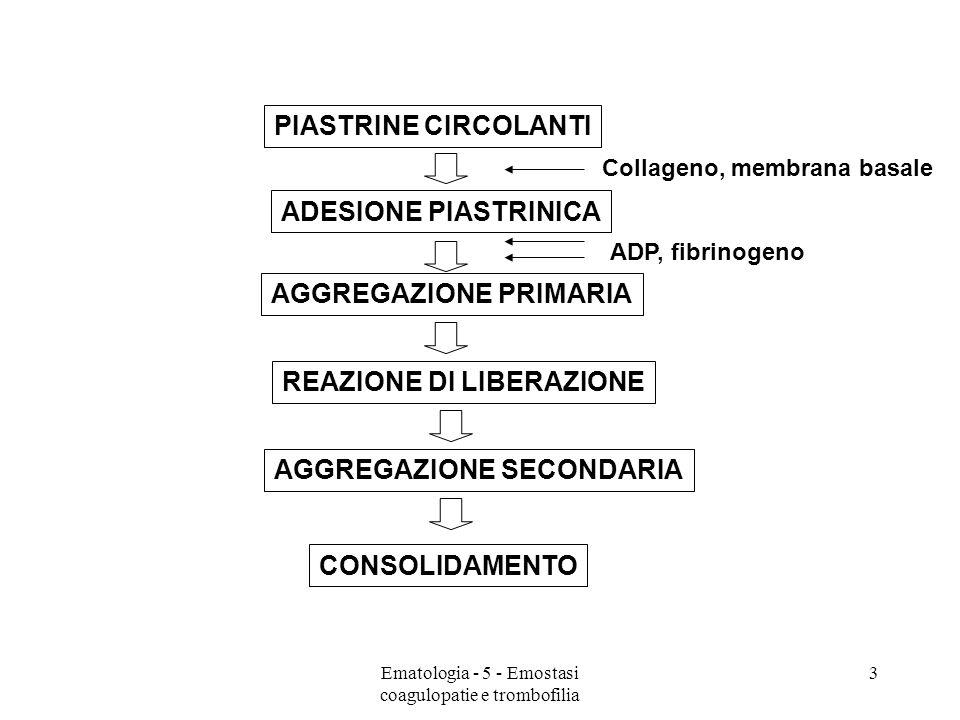 PIASTRINE CIRCOLANTI CONSOLIDAMENTO ADESIONE PIASTRINICA AGGREGAZIONE PRIMARIA REAZIONE DI LIBERAZIONE AGGREGAZIONE SECONDARIA Collageno, membrana basale ADP, fibrinogeno 3Ematologia - 5 - Emostasi coagulopatie e trombofilia